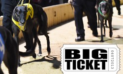 Horsham Cup Heats Preview: Ticket to Fame