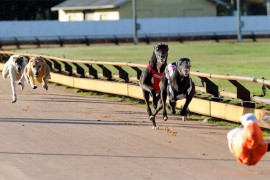 Horsham Cup Heats Wrap: Speeding Ticket Fastest