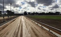 Horsham open for trials