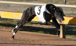 Nervous An Weird a red-hot chance in Horsham Cup